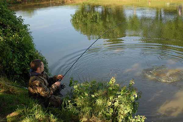 Upham farm fishing website for Farm pond fish